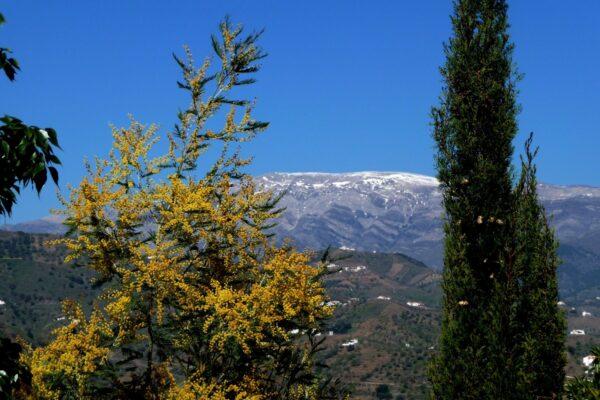 Pico-La-Maroma